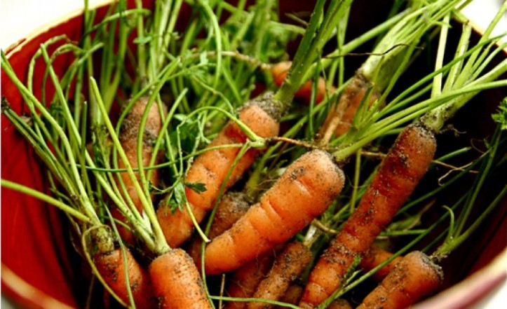 Organic-carrots-770x470